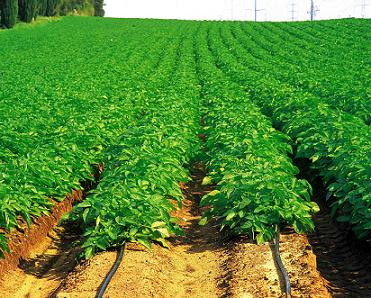 ag_crops_field