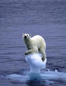 Global_Warming_polar_bear