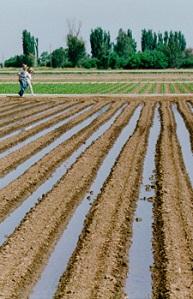 irrigation-furrows
